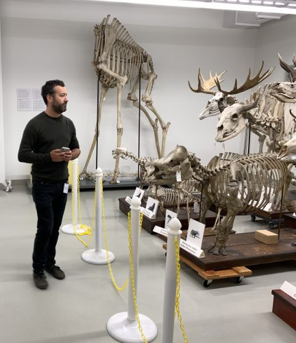 Man standing in front of large animal skeletons at museum